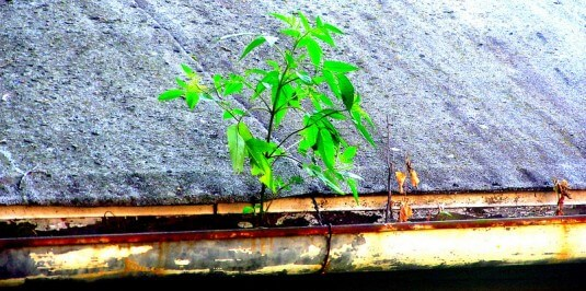 A Tree Grows in the Gutter