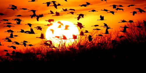 This rush of wings afar