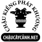 Profile picture of Chau Cay Canh