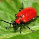 Profile picture of Beetle Control Adelaide